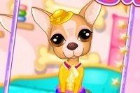 Prenditi cura del Chihuahua