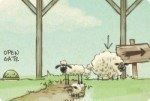 Tornate a casa, pecorelle